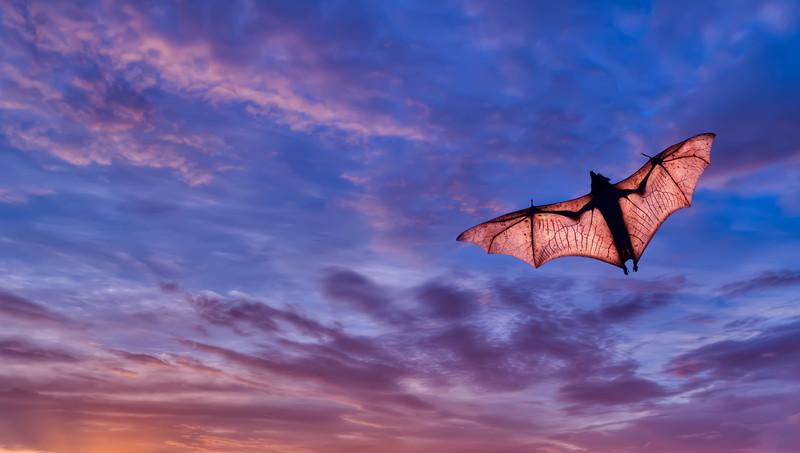 Death & Re-Birth: A Bat's Message